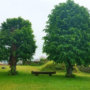 Photo Instagram d'un banc entre deux arbres dans les ruines du Château de Léhon pour l'Instameet Dinan Léhon 2016