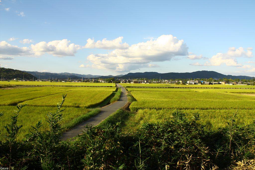 La plaine de Kibi au Japon lors de ma balade en vélo