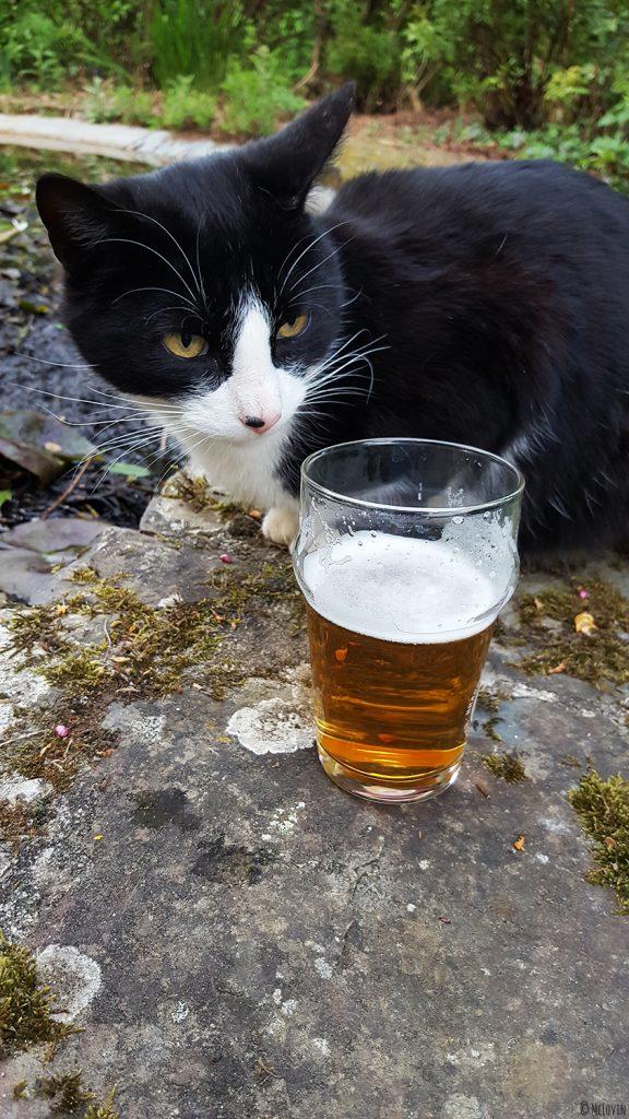 Bouteille et verre de la bière blonde des Faucheurs Volontaires d'OGM devant le chat ! :)